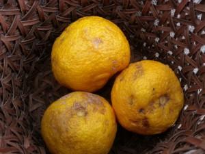 柚子湯用の柚子